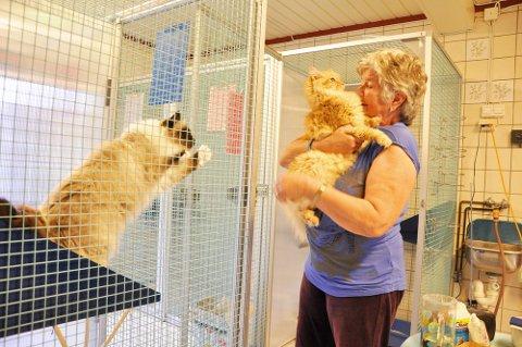 Wenche Ødegaard ved kattepensjonatet Øde-Pus på Fagerstrand har inntrykk av at de aller fleste tar godt vare på dyrene sine, også i ferien.