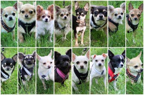 NI SKAL TILBAKE: Ni av de 101 hundene som ble fjernet fra cannibis-gården på Flateby får komme tilbake til eieren. Det har Mattilsynet bestemt.  FOTO: DYREBESKYTTELSEN