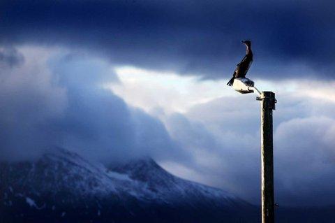 HØST I TROMSØ: 10. oktober er Verdensdagen for psykisk helse. Det har også blitt markert i Norge hvert år. Det er å håpe at vi engang i fremtiden kan slippe å gjøre det. Men det er enda en lang vei å gå. Foto: Yngve Olsen Sæbbe.
