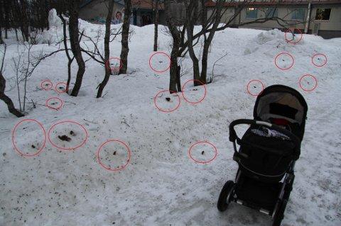 DETTE ER HUNDEBÆSJ! Slik ser det ut i et av Tromsøs mest populære turområder på Sør-Tromsøya. Andreas Bremer telte 181 hundebæsj på en kort strekning.