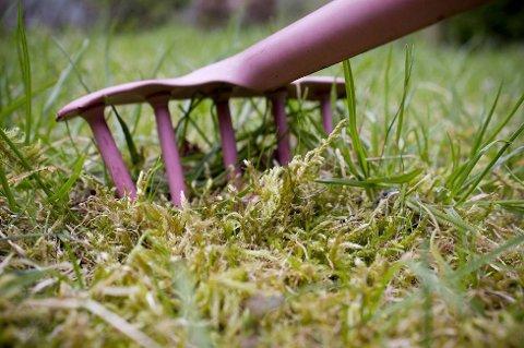 LA DEN GRO: Mosen kan brukes til å bekjempe mordersneglen. (Foto: ANB)