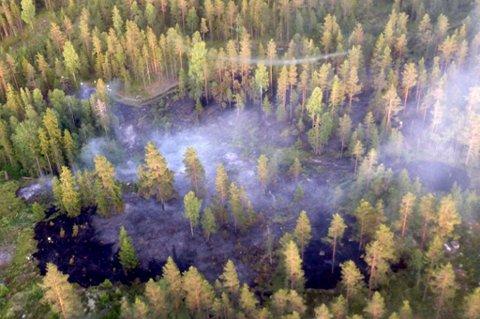 ETTERSLOKKING: Slik ser deler av området ut ved Kolmotjennet etter skogbrannen mandag ettermiddag og kveld. FOTO: BRANNVESENET