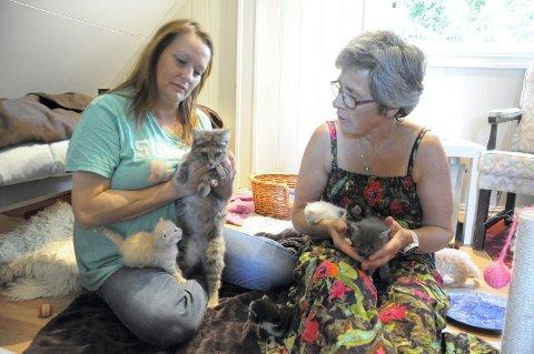 Dyrebeskyttelsens Heidi Halvorsen og fostermor Bente Lystad gjør så godt de kan for to unge kattekull og en kattemamma. ? Men det er umulig for oss å hjelpe alle, derfor må katteeiere bli seg sitt ansvar mer bevisst, sier Halvorsen.