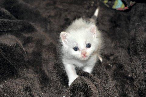 Denne lille kattedamen lever, takket være Heidi Halvorsen i Dyrebeskyttelsen. Om noen uker håper hun på nytt hjem.