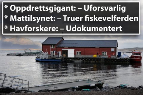 STEIGEN: Cermaq er hjørnesteinsbedrift i Steigen kommune i Nordland. Her tester de blant annet ut oppdrett av triploid, steril laks. En løsning de selv er kritisk til å sette ut i full produksjon på nåværende tidspunkt.