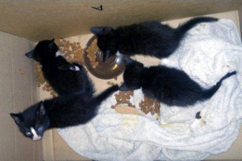 I GOD FORM: De fire kattungene ble tatt hånd om av Dyrebeskyttelsen, og skal nå være i god form.