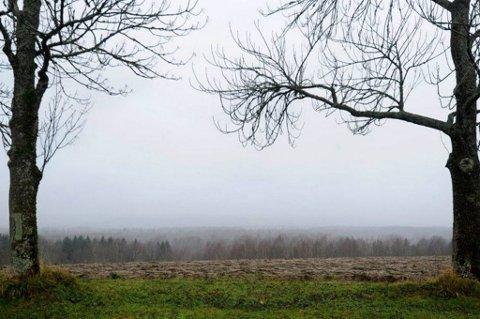 HØSTEN PÅ VEI: Fredag er det varslet om kraftige vindkast på Romerike og ellers på Østlandet.