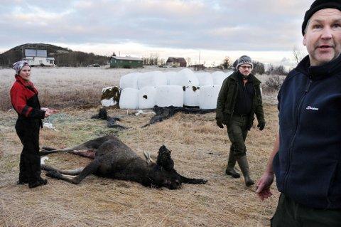 Trist. Både Hans Tore Bakkeli (t.h.) og Terje Halmøy fra Hamarøy viltnemnd synes hendelsen på Buvåg var svært trist. Det samme gjør gårdbruker Rita Larsen Strand.