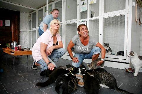 Dette har vært den verste sommeren noensinne, sier Hilde Emilie Larsen og Inger Johanne Graf i Dyrebeskyttelsen Hordaland. De har tatt hånd om 150 katter.