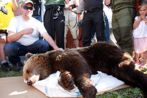 Bjørnen som blei skoten i Fjærland i juni 2008, blir no å sjå i Førde, Sandane, Florø  og i Kaupanger. Arkivfoto.