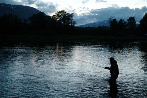 Protest: Elveeierne mener fisken i Driva er i ferd med å bli motstandsdyktig mot Gyrodactylus salaris, og protesterer på tiltakene som planlegges.