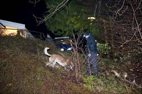 Politihunder ble satt inn i sporsøk umiddelbart etter at drapsalarmen gikk om kvelden 1. januar.
