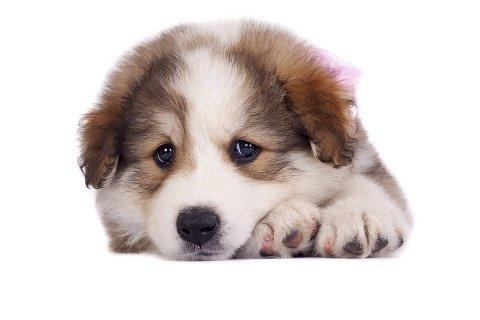 Denne hunden er ikke helt fornøyd. Hvordan står det til med humøret på kjæledyret ditt?