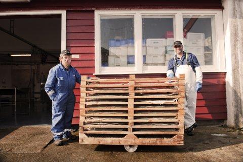 Dagleg leiar Øyvind Lending (t.h.) og Endre Isaksen med klippfisk klar for tørking. Frå produksjonsanlegget i Ytrøygrend.