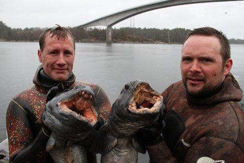 HELGAS STØRSTE FANGST: Kristoffer Raun og Rene  Setereng fanga kvar sin steinbit med harpun. Den største steibiten (til høgre) veg heile 9,1 kg. ? No vert det middag,  seier dei.