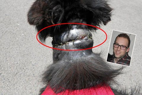 Sam ble funnet i en forderdelig forfatning, sårene har nå grodd igjen og han er en glad familienhund.