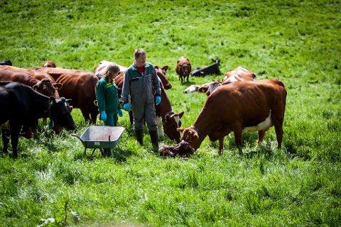 UTE: Kalven er ute og no må mennesket trø til og frakta den nyfødde og mora inn i floren.