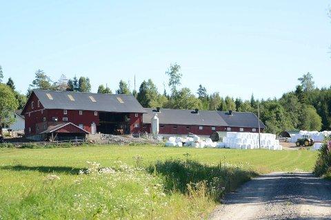 Observert i skogen: Det var noen hundre meter inn i skogen utenfor Ruken gård i Trøgstad som villsvinene ble sett tirsdag.