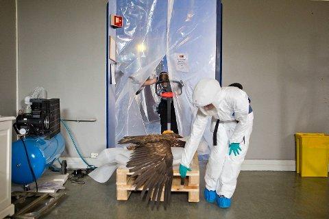 Konservatorene Marielle Bergh og  Stine Rost Kronvang tar en ørn ut av saneringsboksen.
