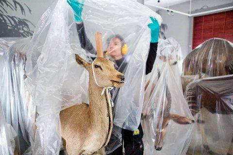 Konservator Alexandra Bøhme dekker dyrene med plastikk når de er ferdig renset. Slik unngår man at de blir dekket av nytt støv.