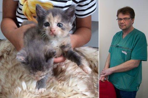 Dumping av kattungar kjem av at folk har for dårlege haldningar til dyr, meiner veterinær Terje Negard.