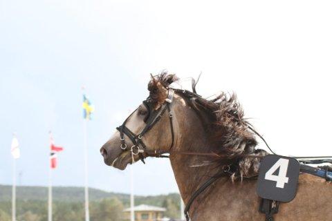 Regiontraveren Smedheim Solan, med tilhold på Røros, innfridde i Sverige, og vant finalen av Svensk Kaldblodskriterium på Dannero.