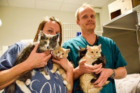 Heidi Halvorsen fra Dyrebeskyttelsen Ringerike og veterinær hos Ringerike Dyreklinikk, Bjørn Erik Strand, har hendene fulle av hjemløse katter.