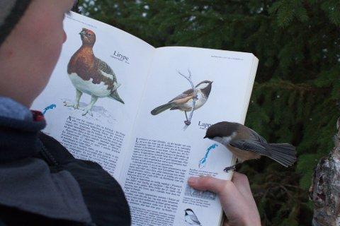 NYSGJERRIG: Lappmeisen synes å være nysgjerrig på hva mennesker skriver om fuglefamilien den tilhører.