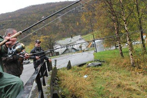 Fiske etter rømt oppdrettslaks kan bli ein lukrativ hobby fram til 15. desember.