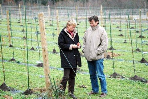 VINGÅRD: En vingård i Norge i november er ikke akkurat Falcon Crest, men neste år kan Wenche Hvattum og Joar Sættem høste av vinrankene bak seg.