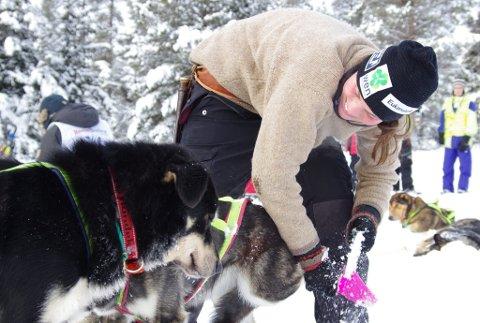 NYE EVENTYR: Sigrid Ekran og hundene er klare for Finnmarksløpet. Bildet er fra Søvollen, under årets Femundløp. Arkivfoto: Tonje Hovensjø Løkken