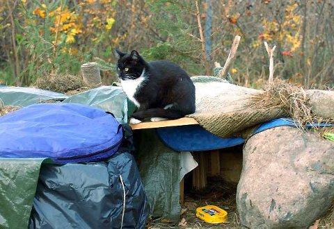 Må opphøre: Mattilsynet mener katteholdet på Omrestranda må opphøre før vinteren setter inn. Det betyr at Agnar Melbersg 30 katter må avlives. (Foto: Nils-Erik Kvamme)