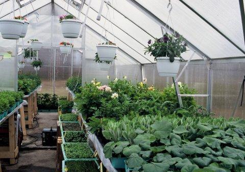 Når plantene står i veksthuset ferdige til utplanting, gir det en tilfredsstillelse som lønn for alt arbeidet.