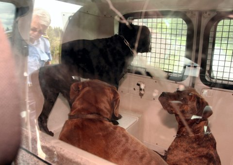 OMPLASSERT: I mai 2010 hentet politiet og Mattilsynet 10 hunder fra hundeeierens eiendom i Åsnes. Her er tre av hundene som ble omplassert, etter at dommen mot hundeeieren ble rettskraftig.