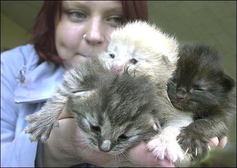 Tanja Pedersen, representant for dyrebeskyttelsen i Nordland, har tatt vare på de hjemløse kattungene. Nå trenger hun hjelp til å holde dem i live.