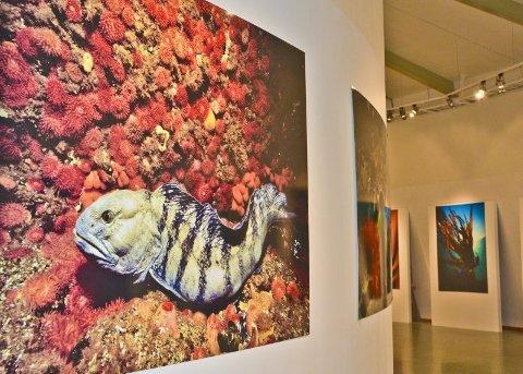 Helt magisk. Dykker Vebjørn Karlsen har stilt ut bilder i rotunden.