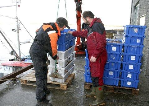 KRABBER: Det kommer kassevis med krabbe i land daglig på Vega fiskemottak. Til stor glede for alle lokale fiskere som nå slipper å gå helt til Brønnøysund for å levere fangsten. F.v. Terje Hansen og Bjørn Hansen. Bak står Mikael Carlsson og styrer krana. (Foto: Linda Storholm)