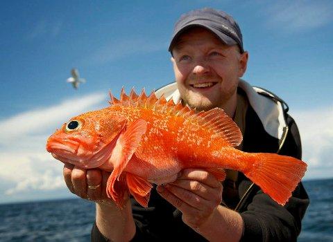 3: SØRØYA: Fisketuren til Sørøya sommaren 2013, er eit fiskehøgdepunkt for Hopland. Her med ein blåkjeft.