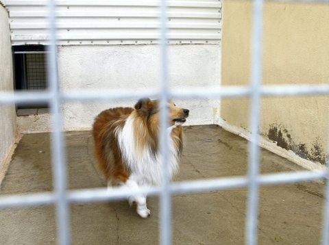 DETTE ER LUFTEGÅRDEN: Slik ser luftegården ut, som skal gi hundene et sted å aktivisere seg i frisk luft.