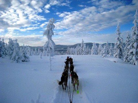 NATUROPPLEVELSER: Nina Skramstad bedyrer at en ikke trenger reise langt i det hele tatt for å oppleve vakker natur, slik utsikten fra hundeløypa ved Gullensetra på Øståsen her viser.