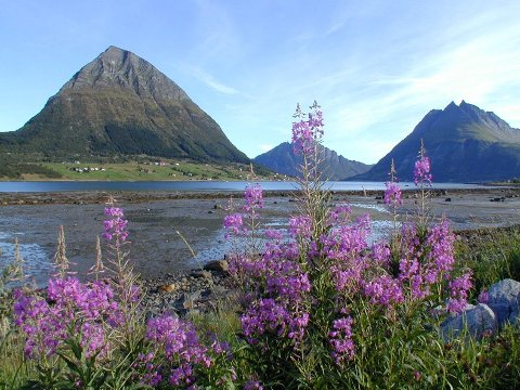Området ved Aldersundet i Lurøy merket jordskjelvet spesielt godt. Foto: Arne Forbord
