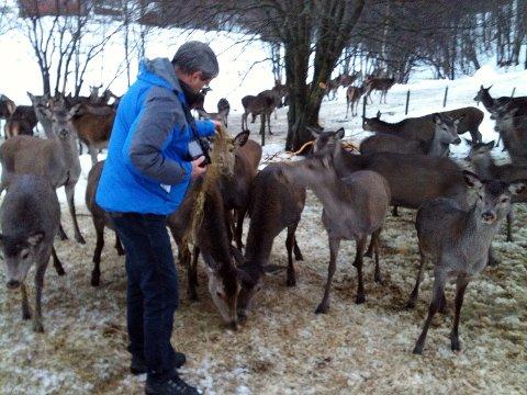 Journalist Roald Sevaldsen mater de utsultede hjortene. Foto: Svein Junge