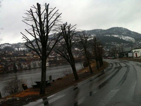 Slik ser bøketrea langs Jølstra på Øyrane ut etter at dei no er skorne ned.