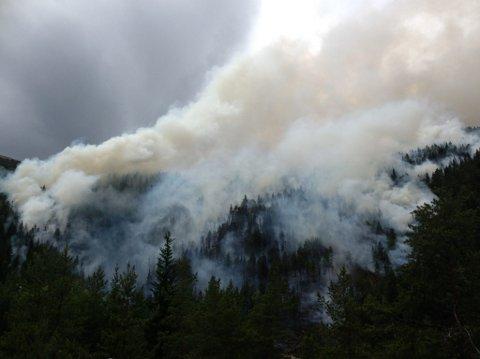 Minst tusen mål med skog har gått tapt i skogbrannen i Rosten.