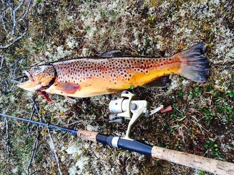 Vinnerfisk: Steinar Åmots fjellørret veide 1,950 kilo. Foto: Privat
