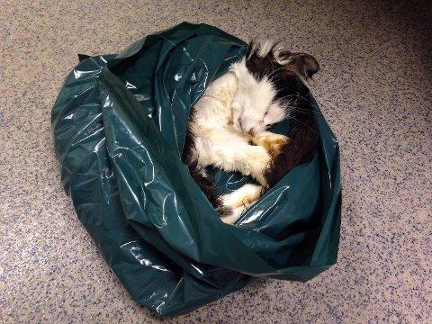 Den andre katten som ble funnet i leiligheten klarte seg ikke. Ved dyreklinikken mener de at Lykke-Line heller ikke hadde overlevd helgen om hun ikke ble funnet nå.