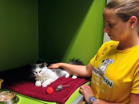 Dyrepleier Marie Skare Furuseth koser med katten som såvidt klarer  holde hodet oppe.