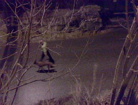 Politiet søkte med hund etter gjerningspersoner etter bråket i Fagerbakken på Eidsvågneset. Her er hund og hundefører i Eidsvågveien (01.01.2009).