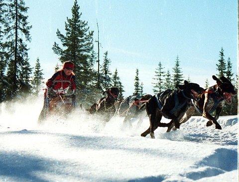 EGEN LØYPE:  På Skjåmoen er det egen løype for  hundekjøring.
