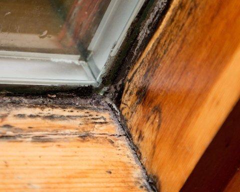 MUGG: Svartmuggen blomstrer rundt vinduene i hyblene til alle de tre jentene.